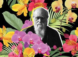 Darwin evolución